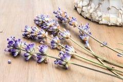 Eine Anzeige des getrockneten Lavendels mit Seeoberteilen Lizenzfreie Stockfotos