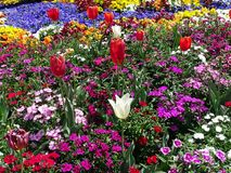 Eine Anzeige von Tulpen und eine Vielzahl von Blumen in einem Garten stockfotografie