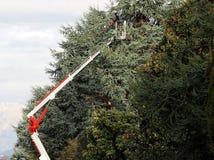 Eine Arbeitskraft beschneidet hohe Bäume von einer Luftplattform an einem kalten sonnigen Wintertag stockfoto