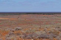 Eine australische Südlandschaft Lizenzfreie Stockfotografie