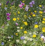 Eine Auswahl von britischen wilden Blumen lizenzfreies stockfoto