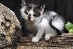 Eine Babykatze Stockfoto