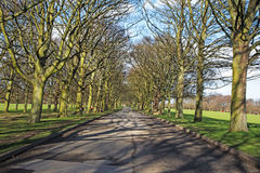 Eine Bahn durch die Bäume Lizenzfreie Stockfotografie
