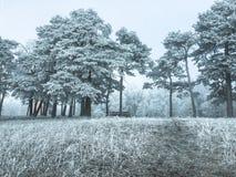 Eine Bahn in einem gefrorenen Wald während der Winterzeit lizenzfreie stockfotografie