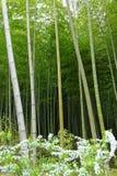 Eine Bambuswaldung lizenzfreie stockfotografie