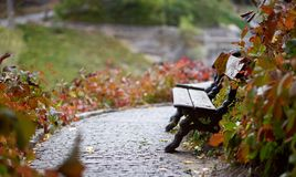 Eine Bank auf einem Weg in einem Herbstpark Lizenzfreie Stockfotografie