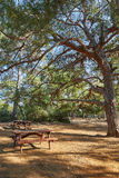 Eine Bank mit einer Tabelle für die Entspannung im Schatten der Bäume Stockfotos