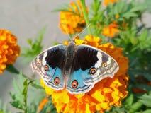 Eine Basisrecheneinheit auf einer Blume stockfoto
