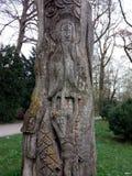 Eine Baum fotografia stock libera da diritti