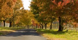 Eine Baum gezeichnete Straße im Fall Lizenzfreies Stockbild