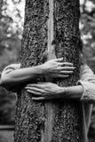 Eine Baum-Umarmung Stockfotos
