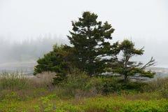 Eine Baumgruppe auf der Küstenlinie an einem nebeligen Tag Lizenzfreies Stockfoto