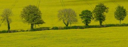 Eine Baumreihe, die in Blatt in den Südabstiegen Nationalpark, Großbritannien kommt lizenzfreie stockfotos