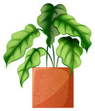 Eine belaubte grüne Zierpflanze Stockfoto