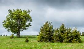 Eine belichtete Gruppe anders als gewachsene Bäume über bewölktem Himmel stockfotografie