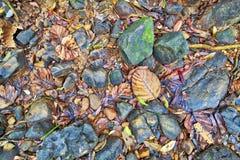 Eine Beschaffenheit von bunten Blättern und von Steinen in einem trockenen Bachbett lizenzfreie stockfotografie