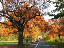 Eine Betonstraße, die durch einen Wald während der Herbstsaison überschreitet Lizenzfreie Stockbilder