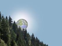 Eine bewaldete Steigung Lizenzfreies Stockbild