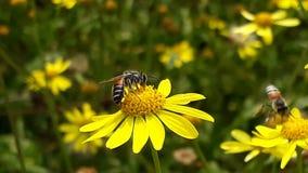 Eine Biene auf einer Blume lizenzfreie stockfotos