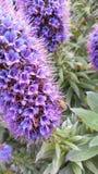 Eine Biene auf einer Blume lizenzfreies stockbild