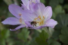 Eine Biene ` s Entdeckung Stockfotografie