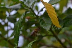 Eine Biene schoss zur Luft gerade nehmen Lizenzfreie Stockfotografie