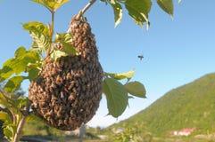 Eine Bienenwabe Lizenzfreie Stockfotografie