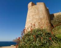 Eine blühende Aloe vor der Zitadellenwand in Calvi in Corsic Lizenzfreie Stockfotos