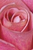 Eine blühende Blume mit der ausführlichen Struktur Stockfotografie