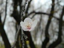Eine Blüte Lizenzfreie Stockbilder