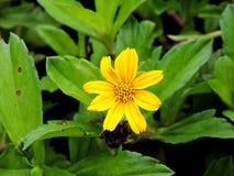 Eine Blume Stockbilder