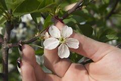 Eine Blume lizenzfreies stockfoto