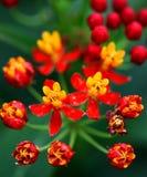 Eine Blume Stockfoto
