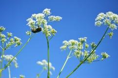 Eine Blume Stockbild