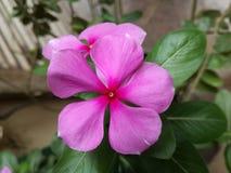 Eine Blume Lizenzfreies Stockbild