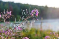 Eine Blume auf einem Gebiet Stockfotos