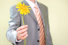Eine Blume in der Hand Lizenzfreies Stockbild
