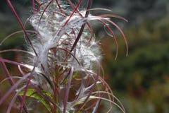 Eine Blume an einem schlechten Tag lizenzfreies stockbild