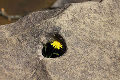 Eine Blume in einem Stein Stockbilder