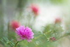 Eine Blume im undeutlichen Hintergrund Stockfotos