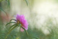 Eine Blume im undeutlichen Hintergrund Lizenzfreie Stockfotos