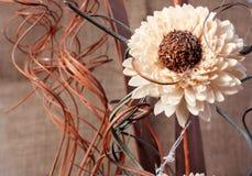 Eine Blume u. curles Stockbild
