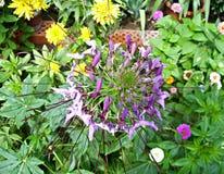 Eine Blume unter Blumen Stockbild
