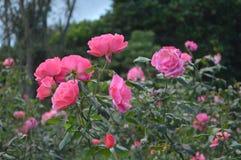 Eine Blumenfamilie ` s glückliche Umwelt Lizenzfreies Stockfoto