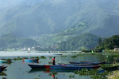 Eine Bootsfrau, die ihr Boot im beträchtlichen Phewa See herausnimmt Stockfotografie