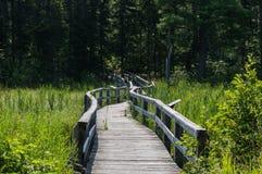Eine Brücke, die in den Wald führt Stockbilder