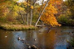 Eine Brücke im Herbst Stockbild