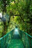 Eine Brücke im Regenwald Lizenzfreie Stockfotografie