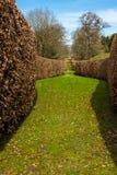 Eine braune Hecke des Kehrens schneidet durch den gr?nen Garten in Derbyshire, England lizenzfreies stockbild