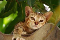 Eine braune Katze, die auf dem alten Dach schläft Lizenzfreies Stockbild